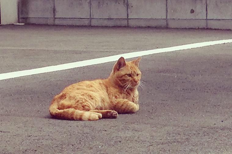 引越し先の近所の外猫さん