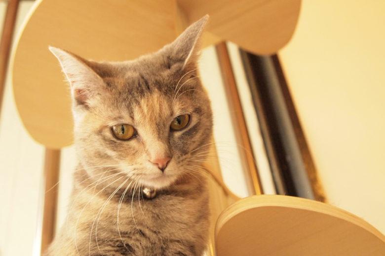 かわいさがハイレベルの猫スタッフが揃う