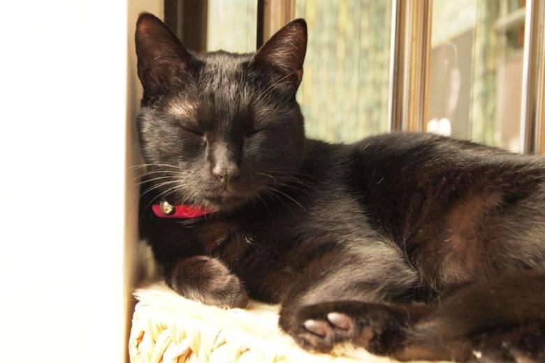 ツヤツヤの黒猫さんもすてき