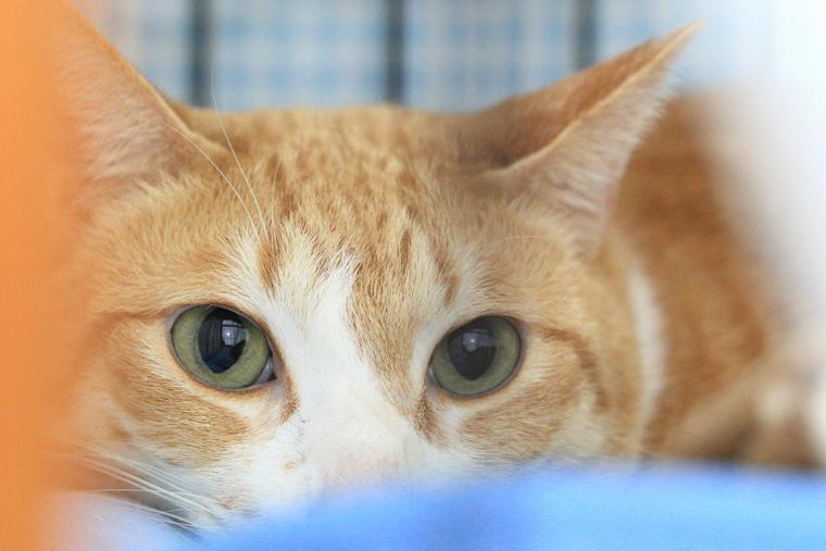 とってもシャイな保護猫さん
