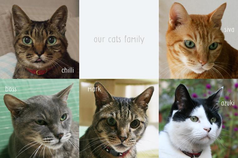 実家の猫ファミリー