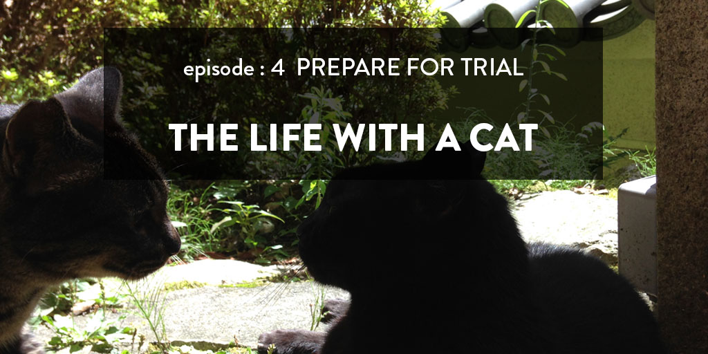 保護猫トライアル準備