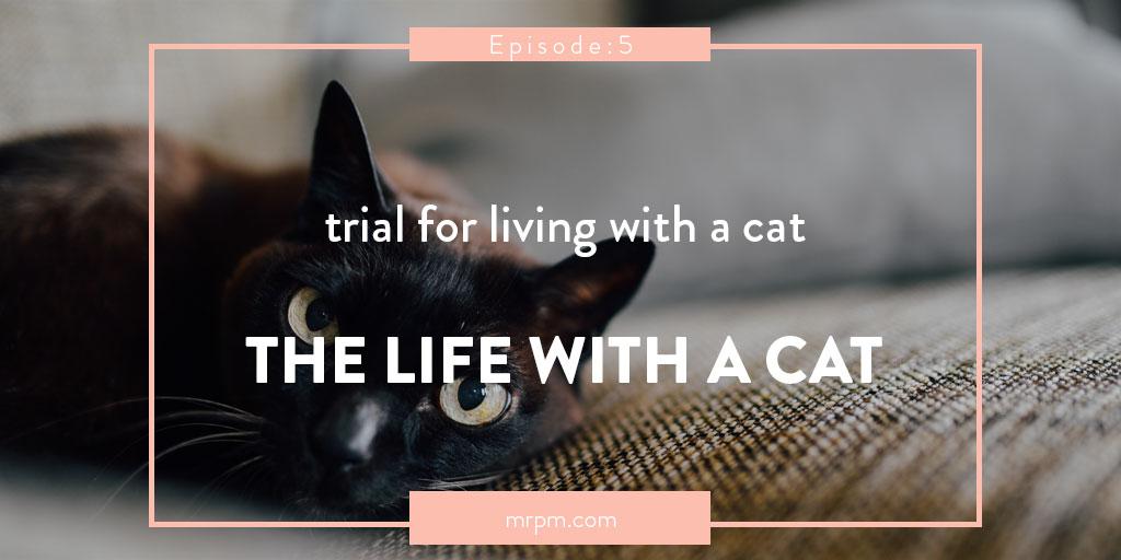 保護猫 トライアル!