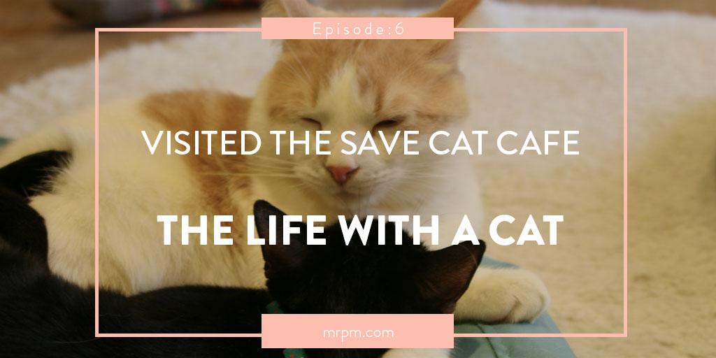 保護猫カフェに行ってみた